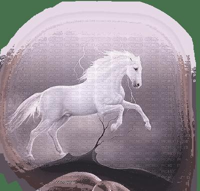 cheval blanc **