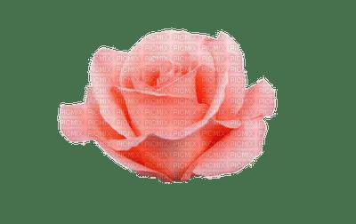 rosa-l