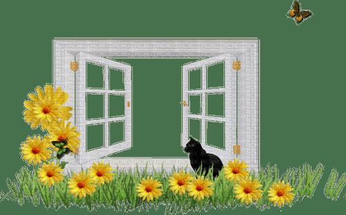 window fenetre cat flowers chat