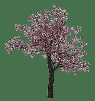 tree anastasia