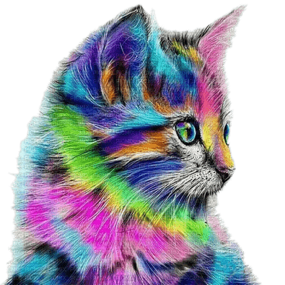 cat colorful chat