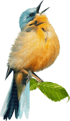 Tournesol94 oiseau