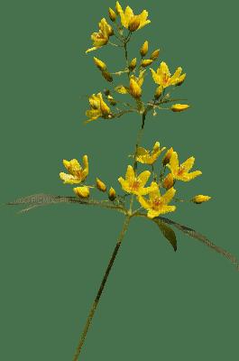 höst blomma---autumn flower