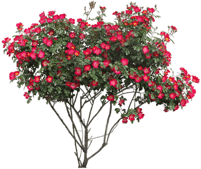 flowering trees Nitsa Papacon