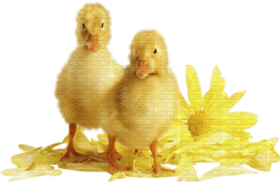 Kaz_Creations Deco Easter Chicks