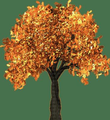 tree autumn automne arbre