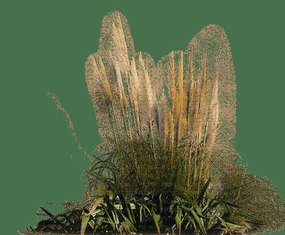 plants anastasia