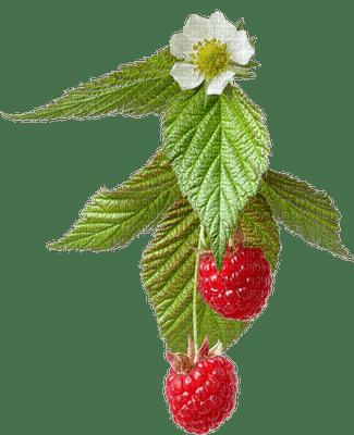 raspberries bp