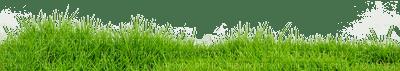 Kaz_Creations Deco Garden Grass