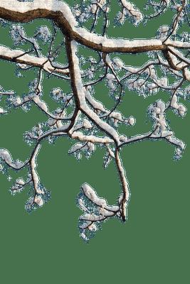 winter branch tree hiver arbre branche