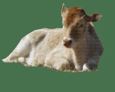 aze vache