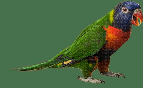 Kaz_Creations Parrot Bird