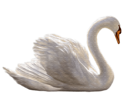 Kaz_Creations Birds Bird Swan