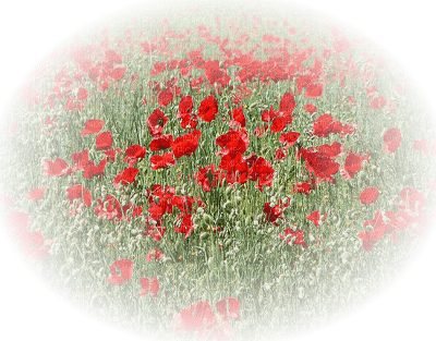 coquelicot fleur paysage deco poppy flower meadow