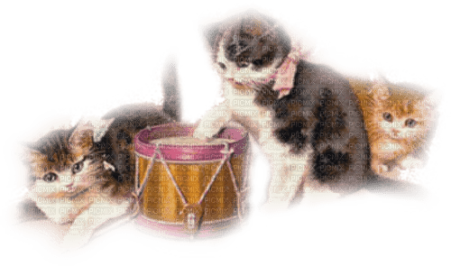 sweet kittens and drum, Joyful226, Connie