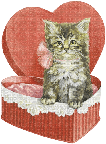cat chat katze animal box