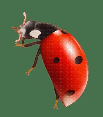 Kaz_Creations Ladybug Spring