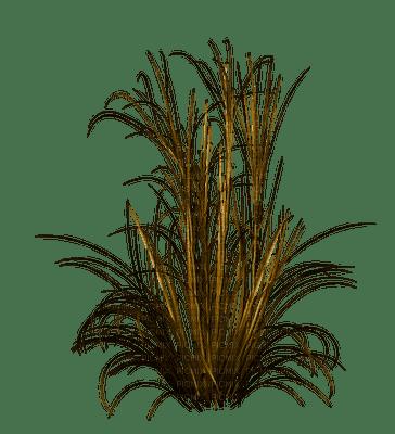 grASs herbe