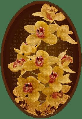 patymirabelle fleurs orchidee