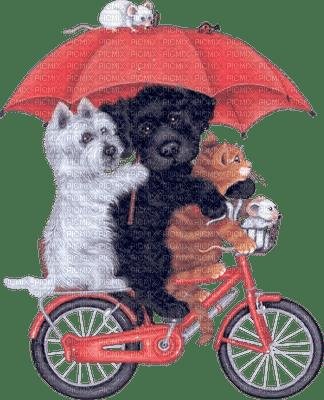 chien  chat vélo parapluie