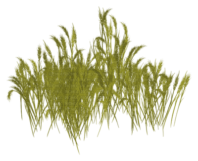 minou-grass-decoration-herbe-décoration-erba-decorazione-gräs-dekoration