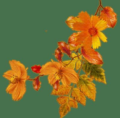 liście/jesień