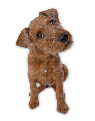 Kaz_Creations Animals Dogs Dog Pup