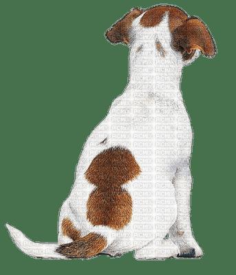 Chien.Dog.Victoriabea