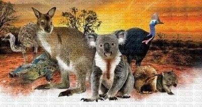 Australia animals bp