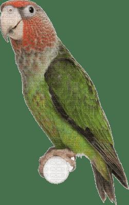 Kaz_Creations Birds Bird Parrot