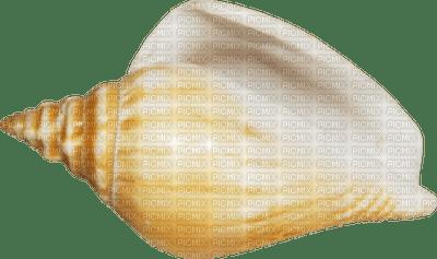 Kaz_Creations Deco Scrap Colours Sea Shell