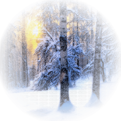 hiver foret soleil paysage winter forest sun