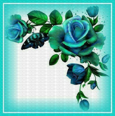 Alpha Blue Rose Boarder