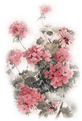 soave background transparent flowers pink
