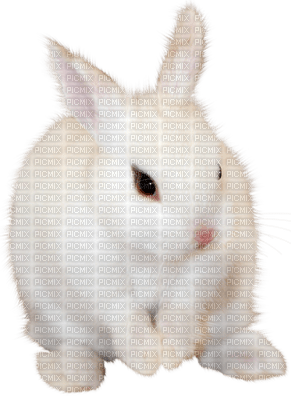 Kaz_Creations Animals Rabbit