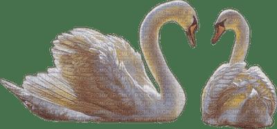 dulcineia8 animais