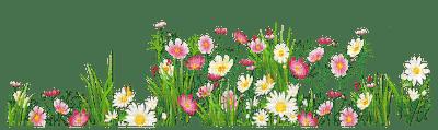 Fleurs.Flowers-garden.jardin.spring.printemps.Plants.Victoriabea