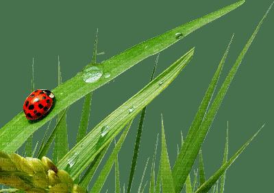 ladybug grass coccinelle herbe