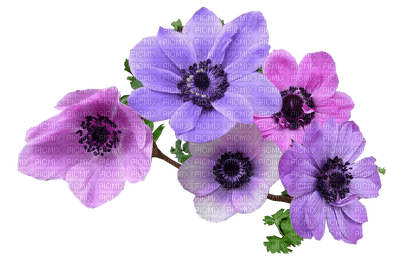 Flowers mauve bp