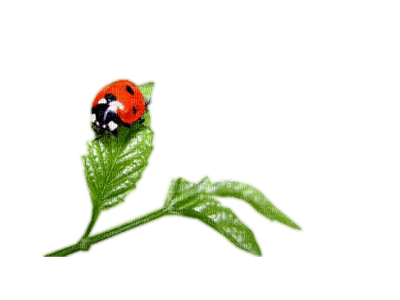 patymirabelle coccinelle