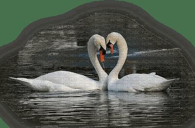 Kaz_Creations Animals  Birds Bird Swans