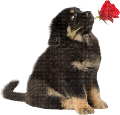 Tube Animaux Chien