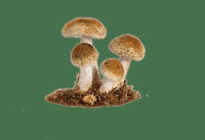 Champignons.Victoriabea