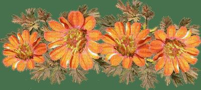 orange peach flowers, sunshine3
