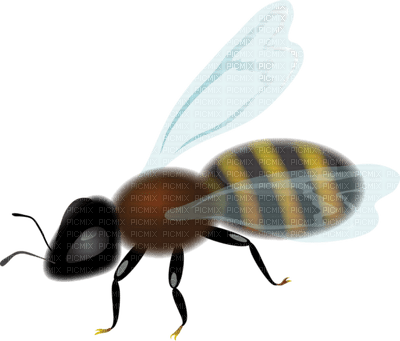 Kaz_Creations Bees Bee