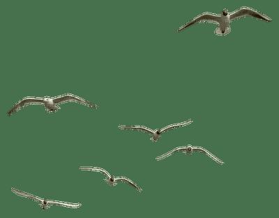birds anastasia