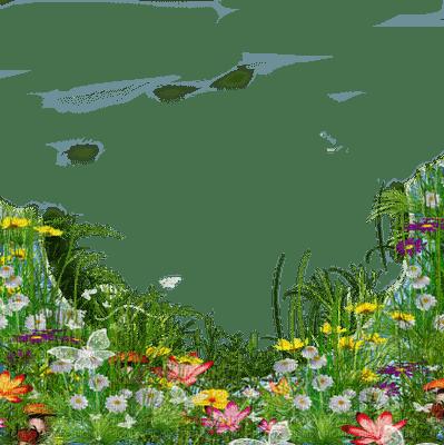 flower border fleur frontiêre