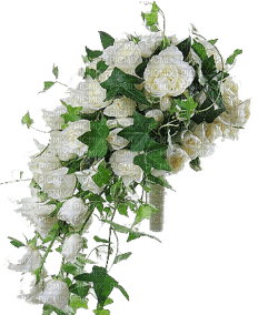 roses blanche GS