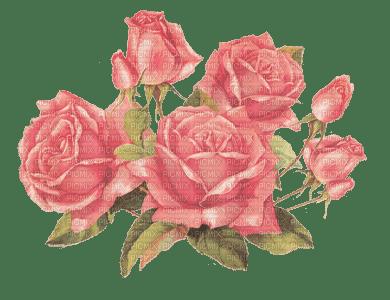 flower-roses-pink