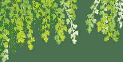 green leaves border vert feuilles deco